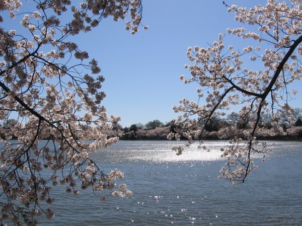 DC Blossoms, by Maki Sato, M12