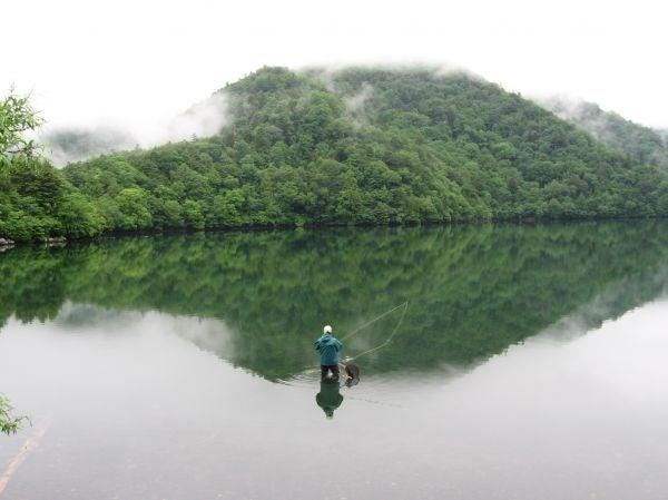Tree and Lake, by Maki Sato, M12